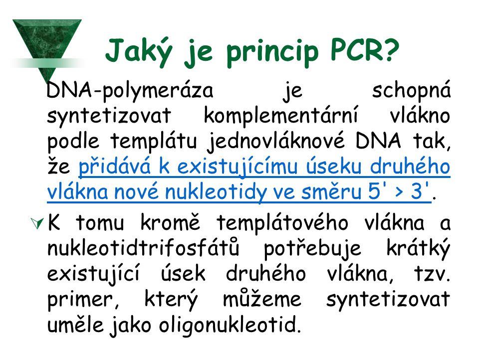 Jaký je princip PCR