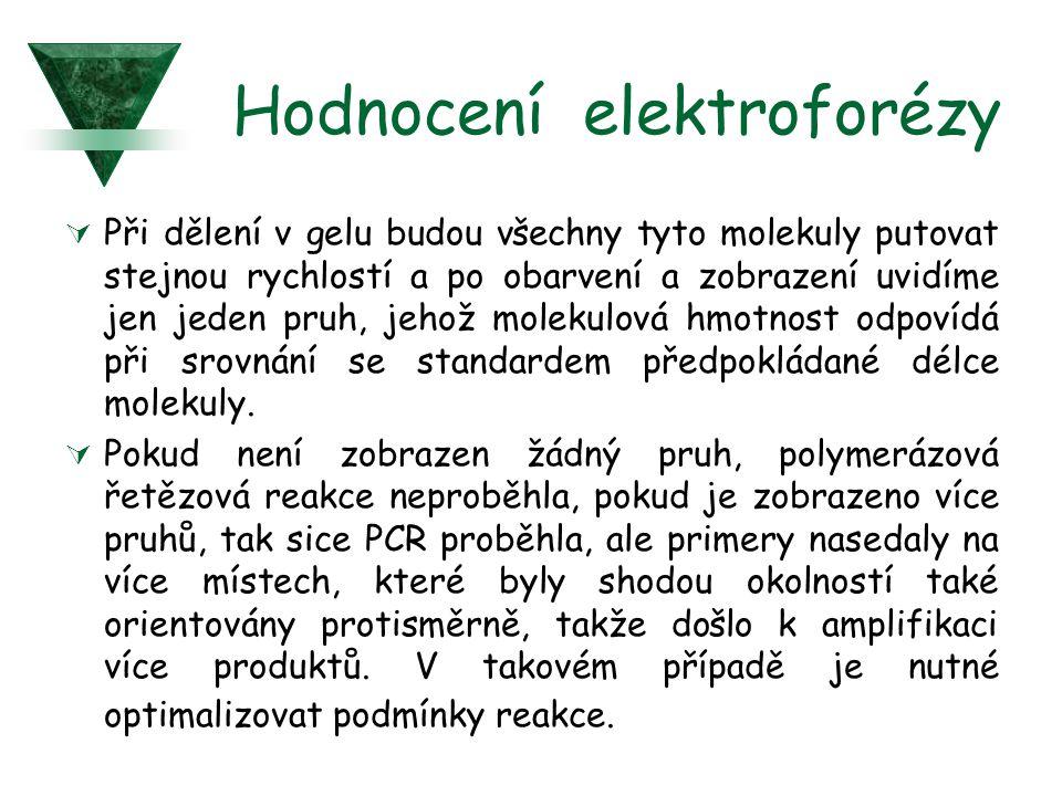 Hodnocení elektroforézy