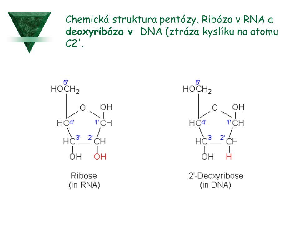 Chemická struktura pentózy