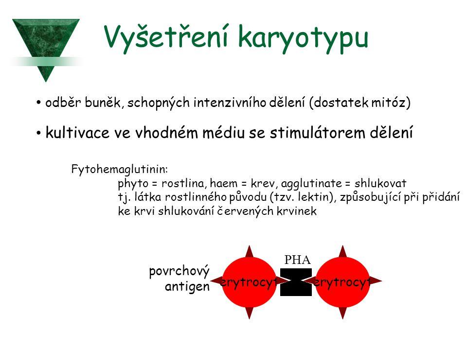 Vyšetření karyotypu odběr buněk, schopných intenzivního dělení (dostatek mitóz) kultivace ve vhodném médiu se stimulátorem dělení.