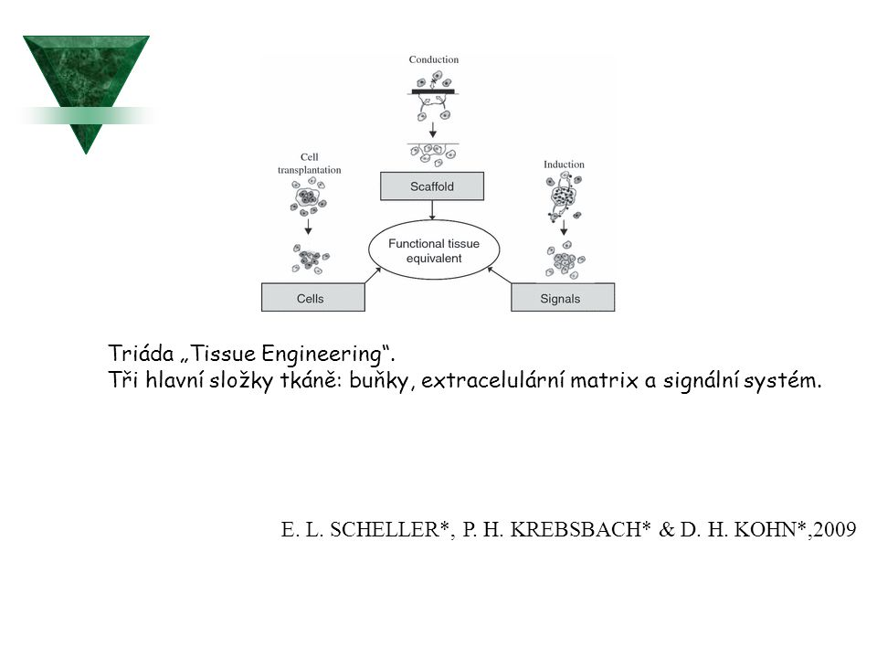"Triáda ""Tissue Engineering ."