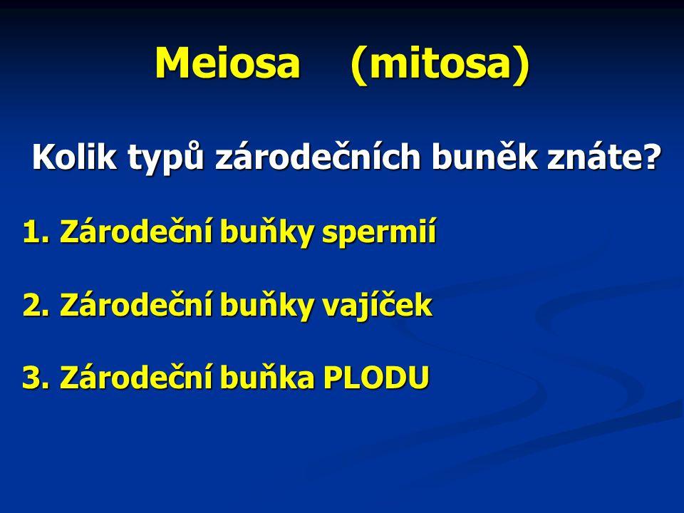 Meiosa (mitosa) Kolik typů zárodečních buněk znáte