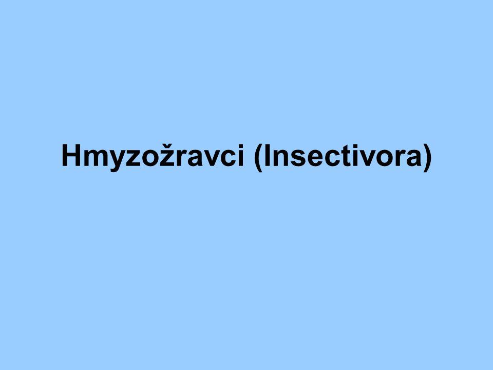 Hmyzožravci (Insectivora)