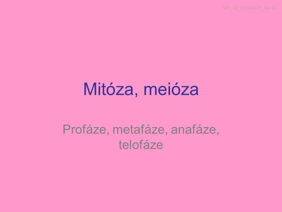 Profáze, metafáze, anafáze, telofáze