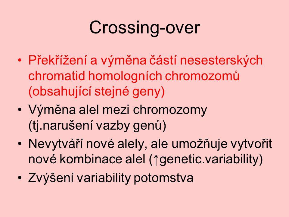 Crossing-over Překřížení a výměna částí nesesterských chromatid homologních chromozomů (obsahující stejné geny)
