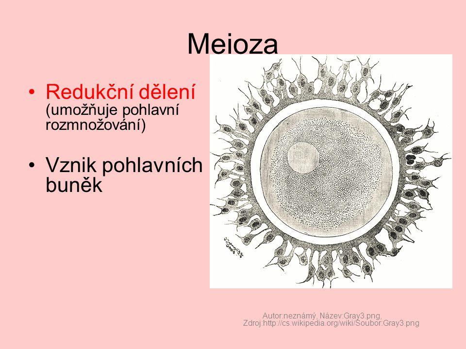 Meioza Redukční dělení (umožňuje pohlavní rozmnožování)