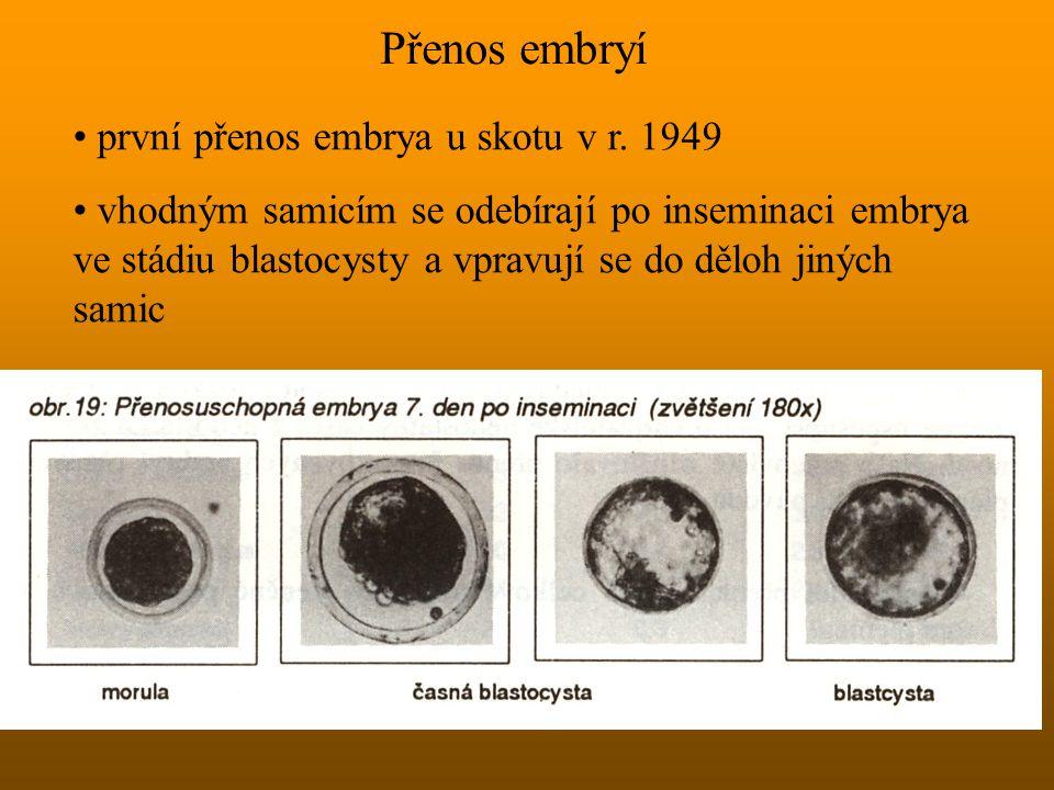 Přenos embryí první přenos embrya u skotu v r. 1949