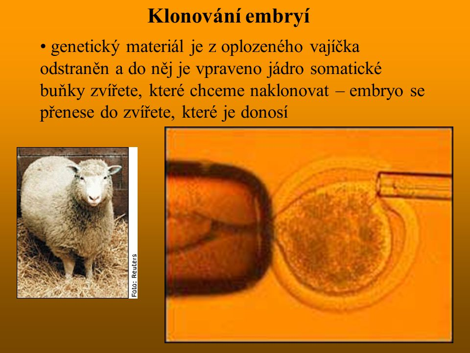 Klonování embryí