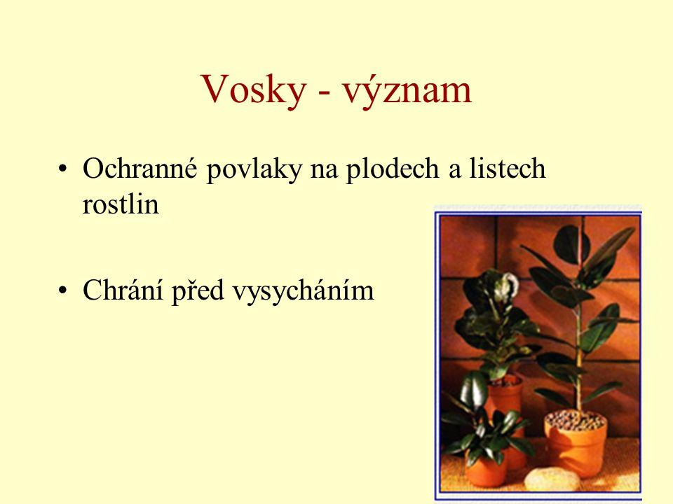 Vosky - význam Ochranné povlaky na plodech a listech rostlin