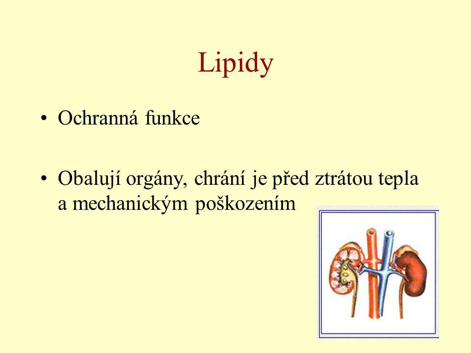 Lipidy Ochranná funkce