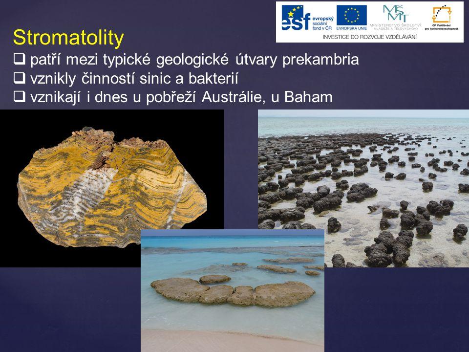 Stromatolity patří mezi typické geologické útvary prekambria