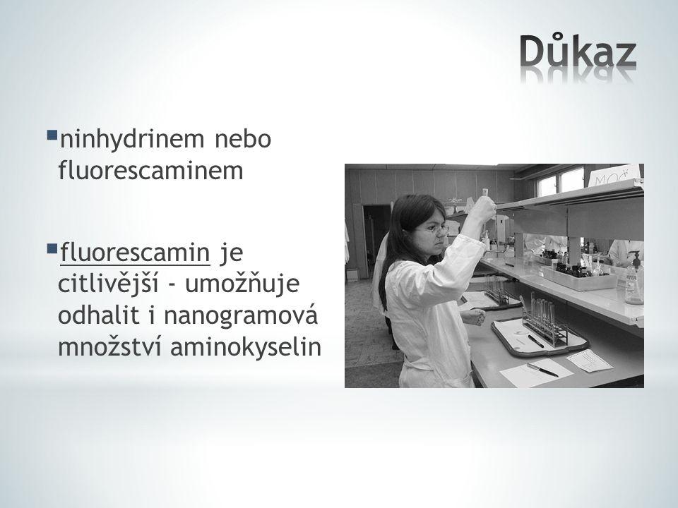 Důkaz ninhydrinem nebo fluorescaminem