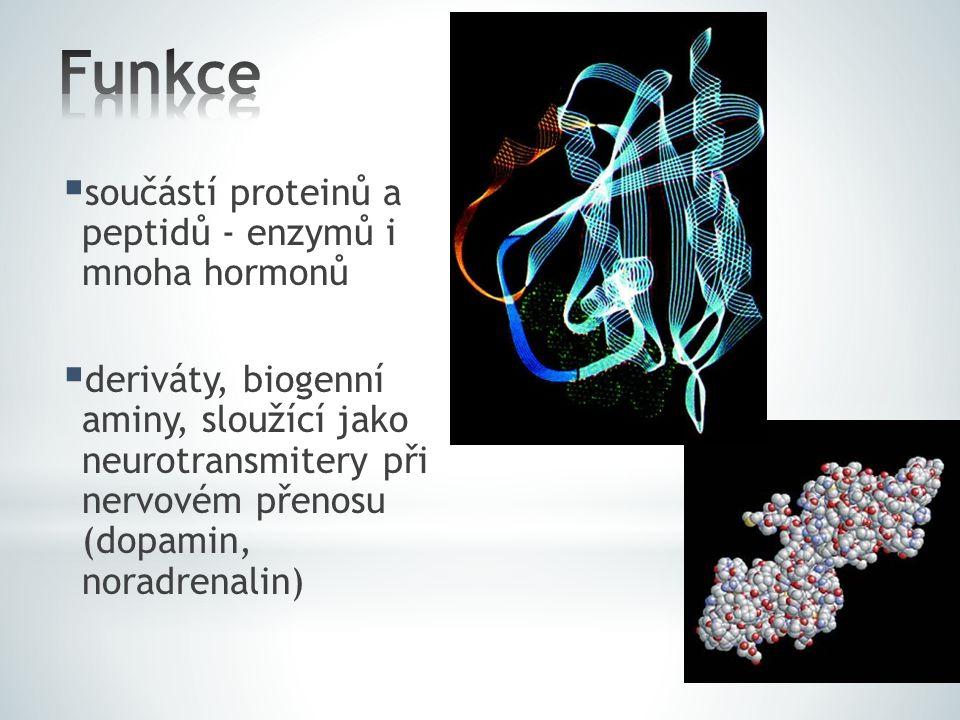 Funkce součástí proteinů a peptidů - enzymů i mnoha hormonů