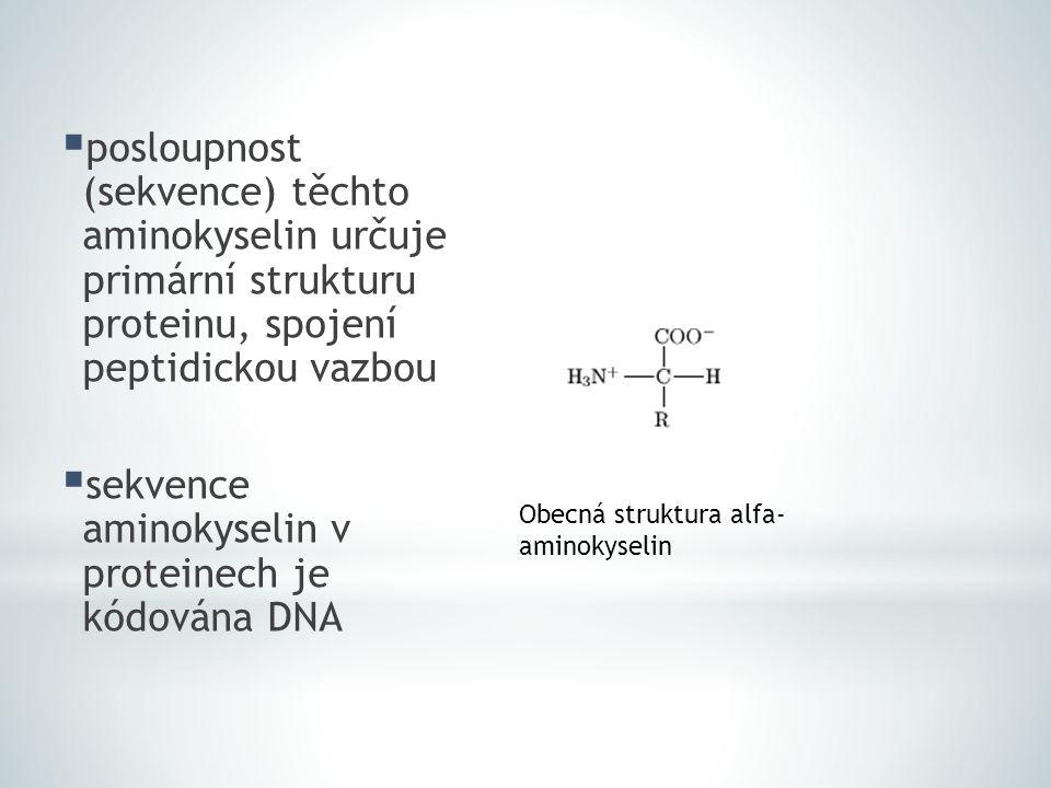 sekvence aminokyselin v proteinech je kódována DNA
