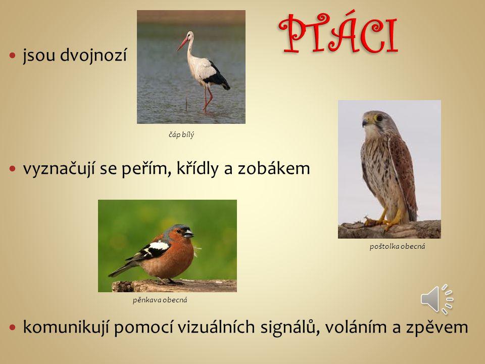 PTÁCI jsou dvojnozí vyznačují se peřím, křídly a zobákem