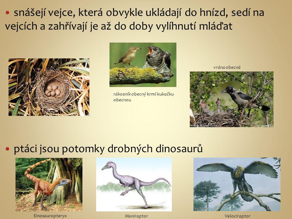 ptáci jsou potomky drobných dinosaurů