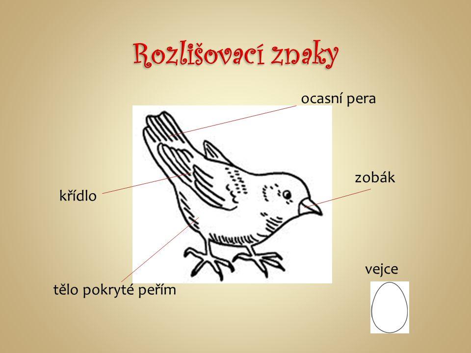 Rozlišovací znaky ocasní pera zobák křídlo vejce tělo pokryté peřím