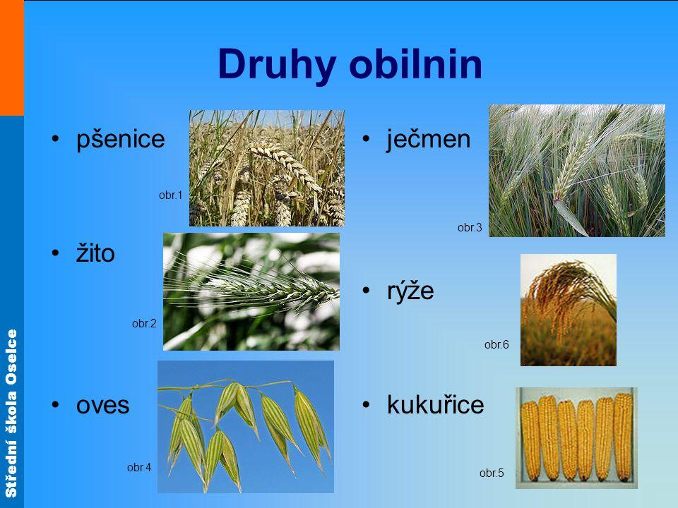 Druhy obilnin pšenice žito oves ječmen rýže kukuřice obr.1 obr.3 obr.2