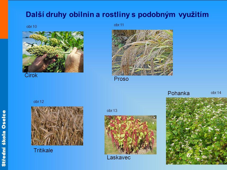 Další druhy obilnin a rostliny s podobným využitím