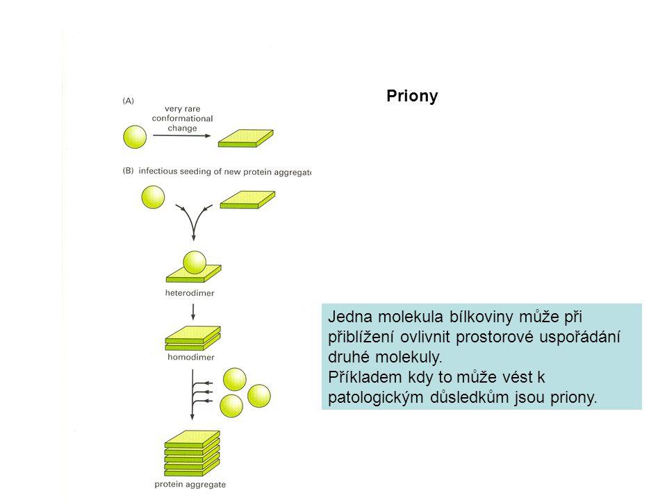 Priony Jedna molekula bílkoviny může při přiblížení ovlivnit prostorové uspořádání druhé molekuly.
