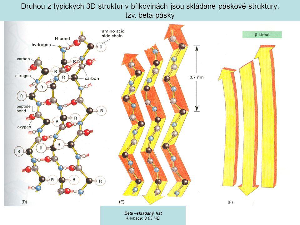 Druhou z typických 3D struktur v bílkovinách jsou skládané páskové struktury: