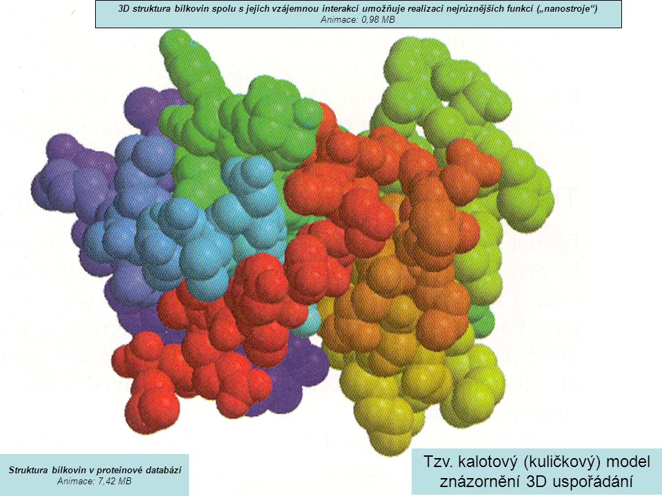 Struktura bílkovin v proteinové databázi