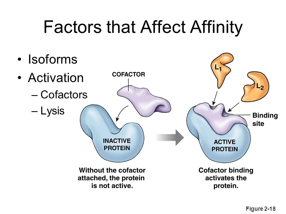 Factors that Affect Affinity