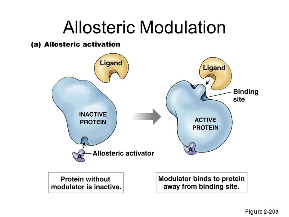 Allosteric Modulation