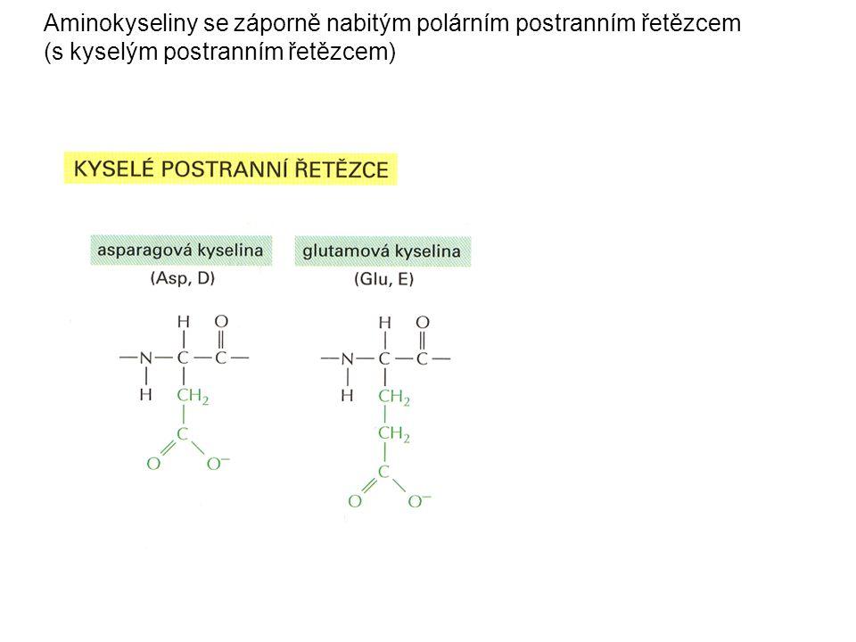 Aminokyseliny se záporně nabitým polárním postranním řetězcem