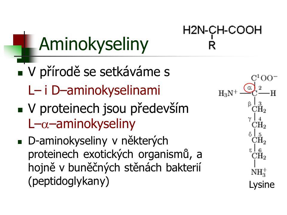 Aminokyseliny V přírodě se setkáváme s L– i D–aminokyselinami