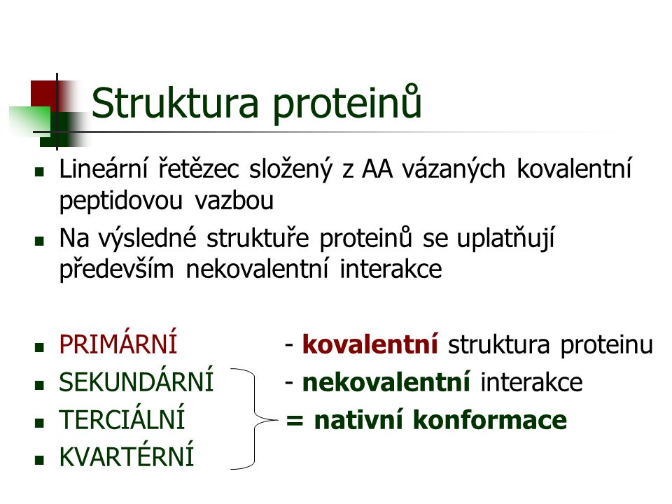 Struktura proteinů Lineární řetězec složený z AA vázaných kovalentní peptidovou vazbou.