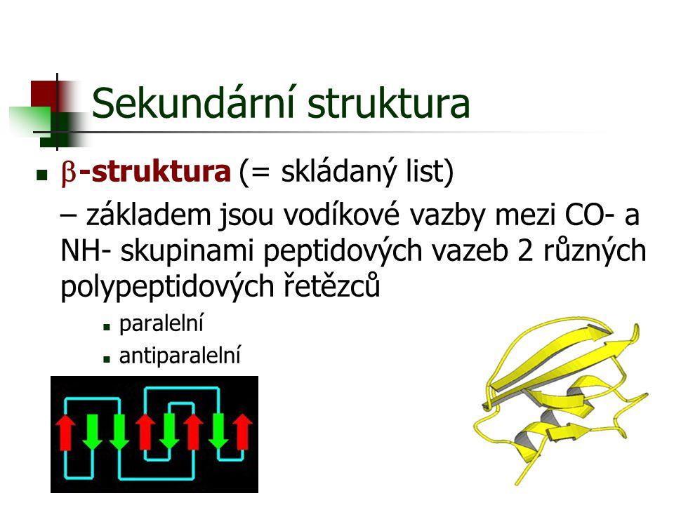 Sekundární struktura b-struktura (= skládaný list)