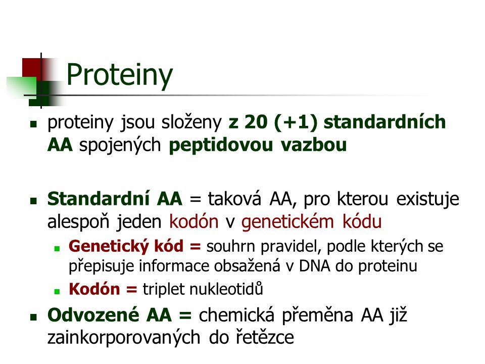 Proteiny proteiny jsou složeny z 20 (+1) standardních AA spojených peptidovou vazbou.