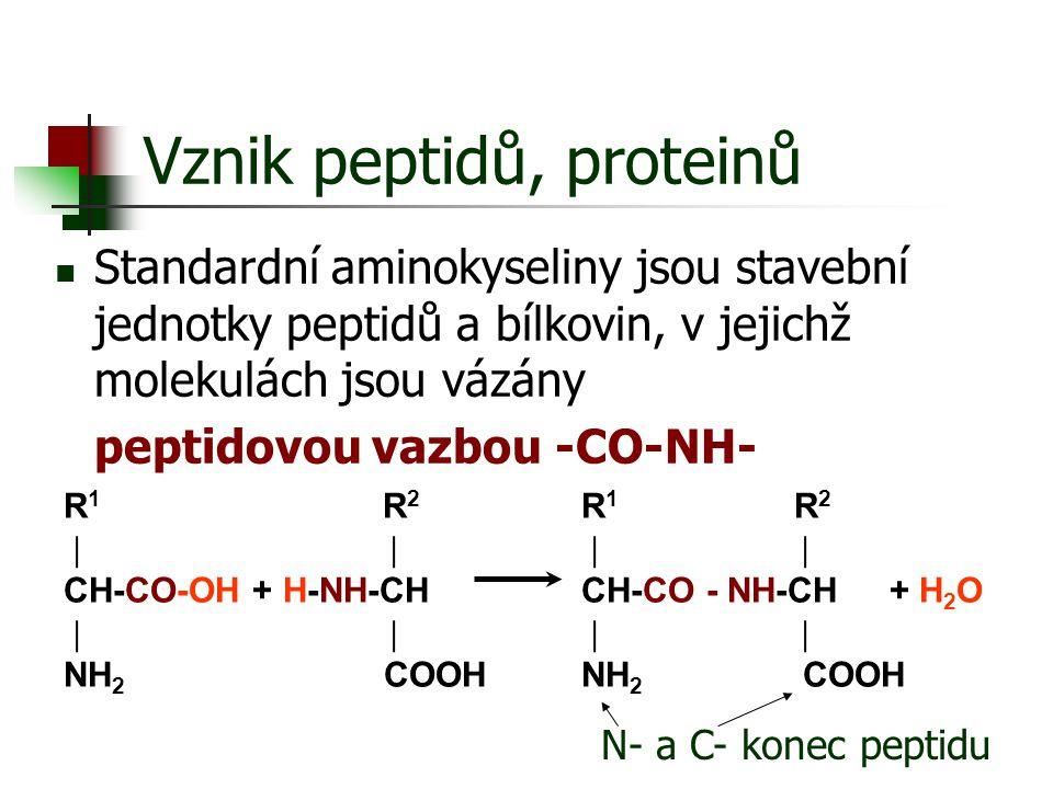 Vznik peptidů, proteinů