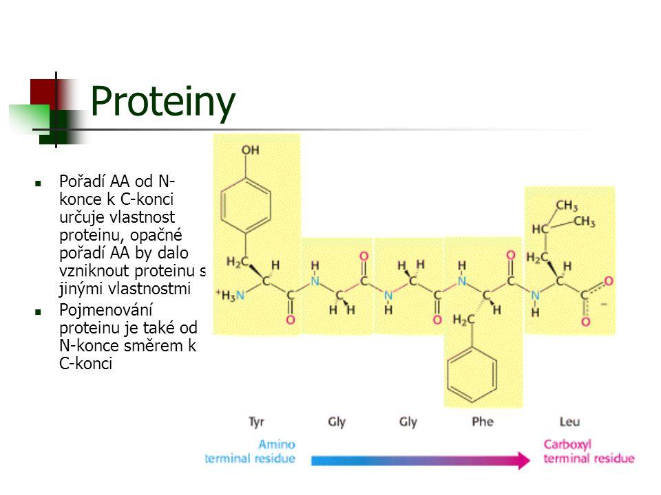 Proteiny Pořadí AA od N-konce k C-konci určuje vlastnost proteinu, opačné pořadí AA by dalo vzniknout proteinu s jinými vlastnostmi.