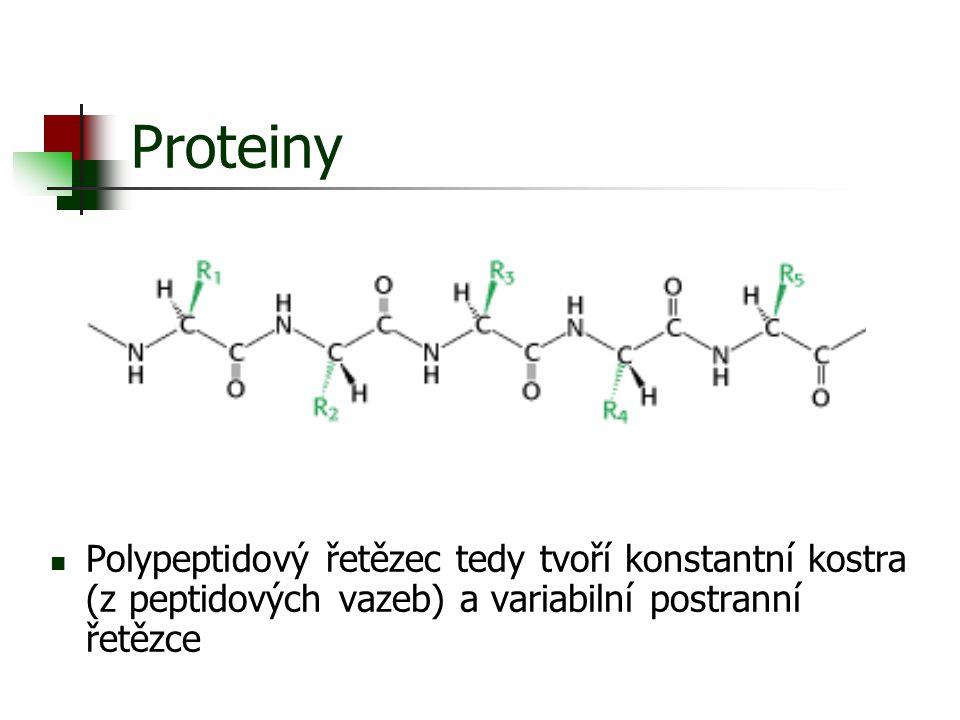 Proteiny Polypeptidový řetězec tedy tvoří konstantní kostra (z peptidových vazeb) a variabilní postranní řetězce.