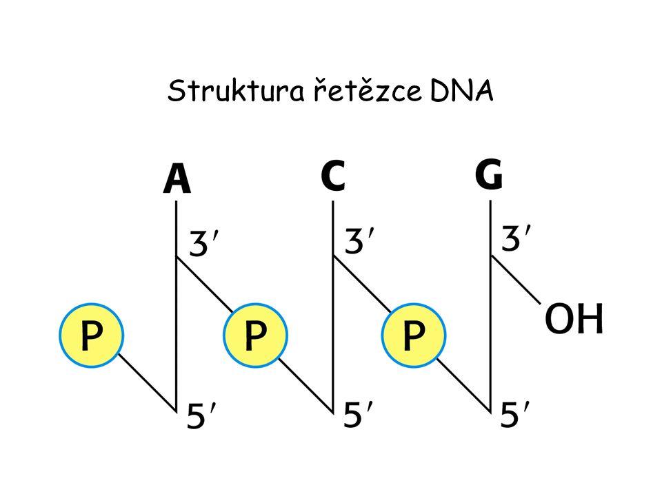Struktura řetězce DNA