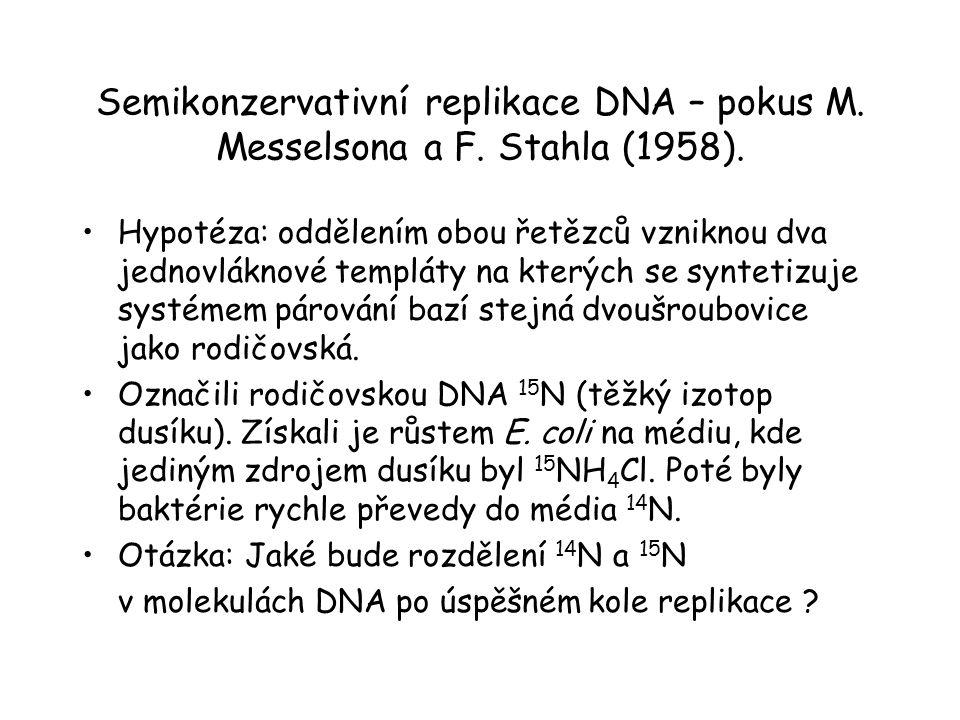 Semikonzervativní replikace DNA – pokus M. Messelsona a F