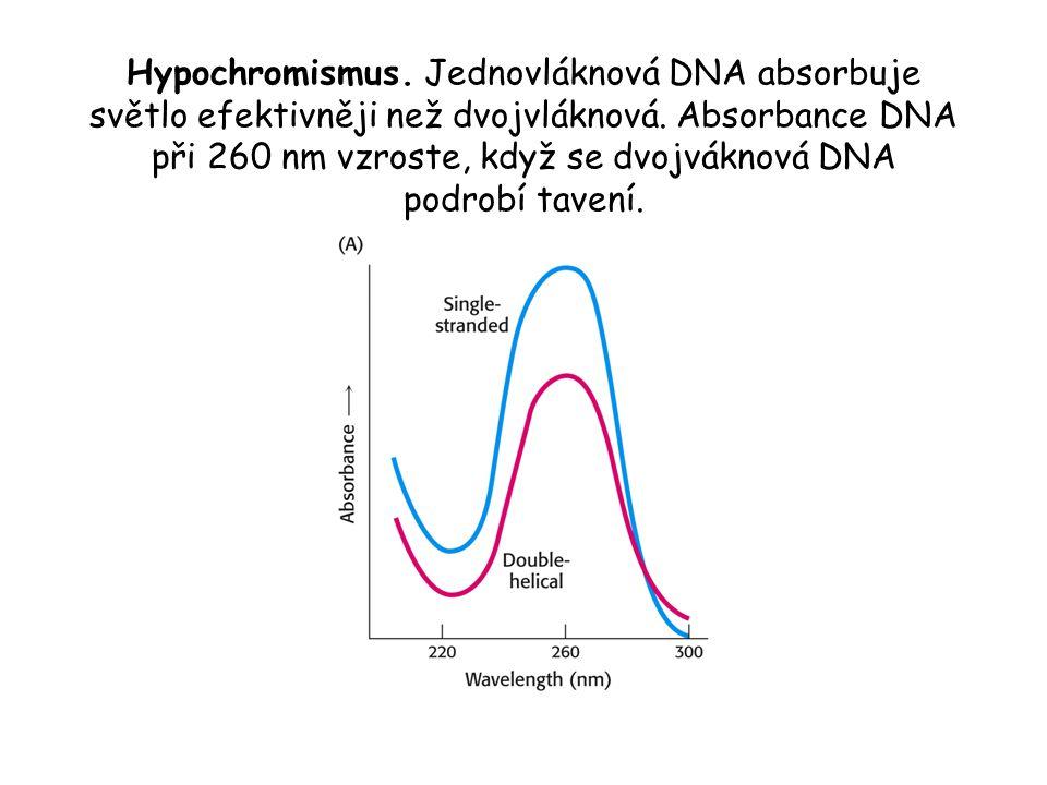 Hypochromismus. Jednovláknová DNA absorbuje světlo efektivněji než dvojvláknová.