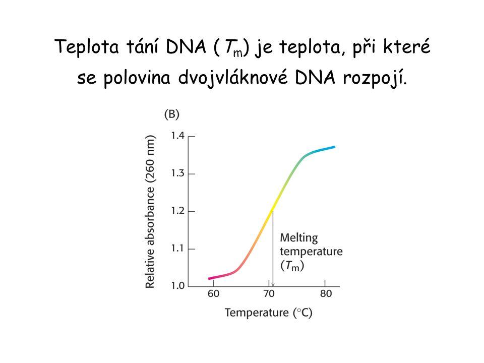 Teplota tání DNA (Tm) je teplota, při které se polovina dvojvláknové DNA rozpojí.