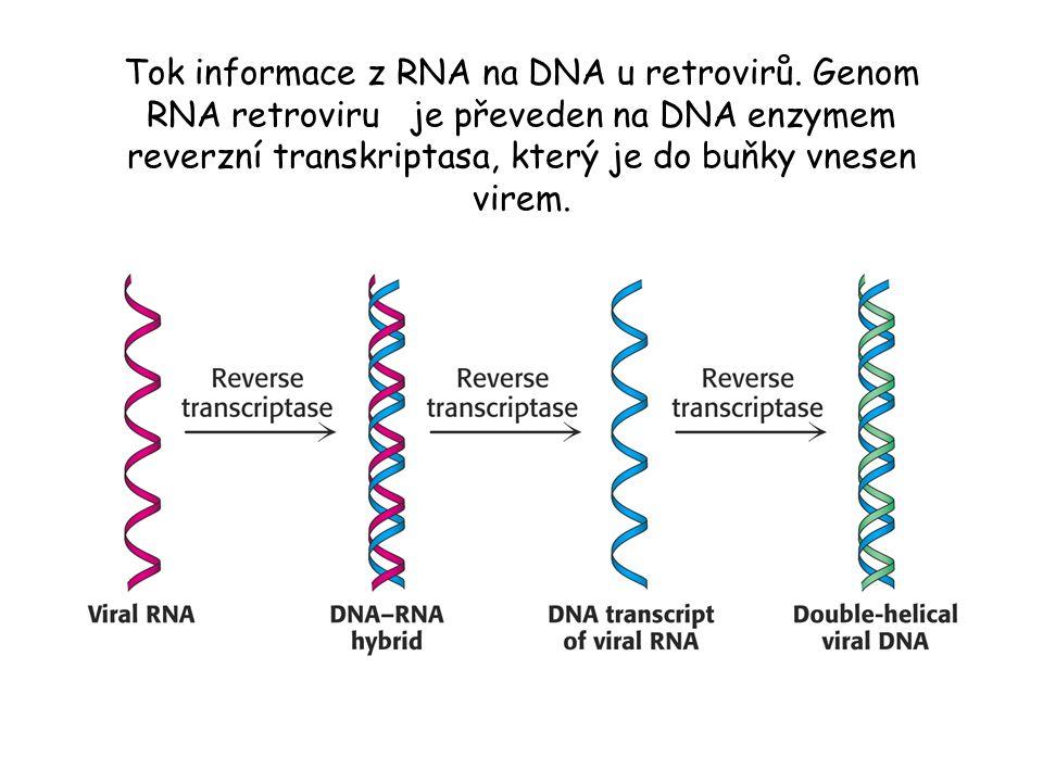 Tok informace z RNA na DNA u retrovirů