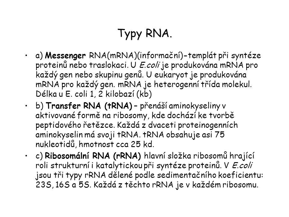 Typy RNA.