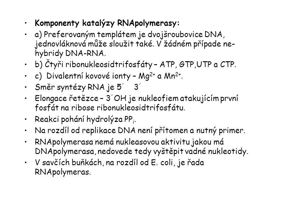 Komponenty katalýzy RNApolymerasy:
