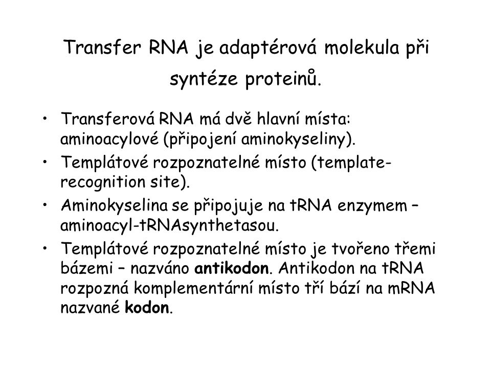 Transfer RNA je adaptérová molekula při syntéze proteinů.