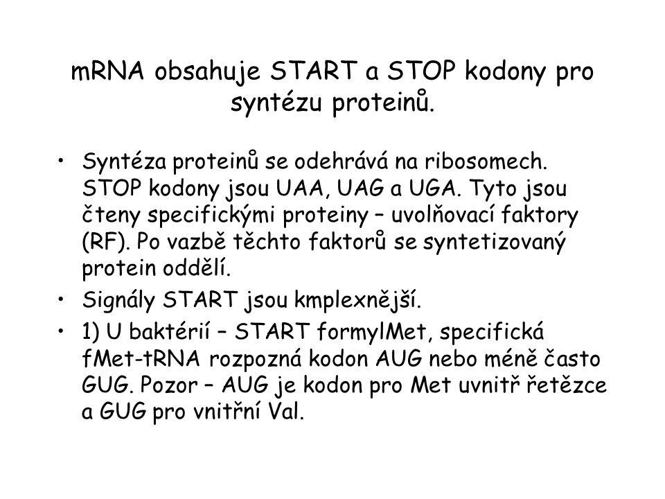 mRNA obsahuje START a STOP kodony pro syntézu proteinů.