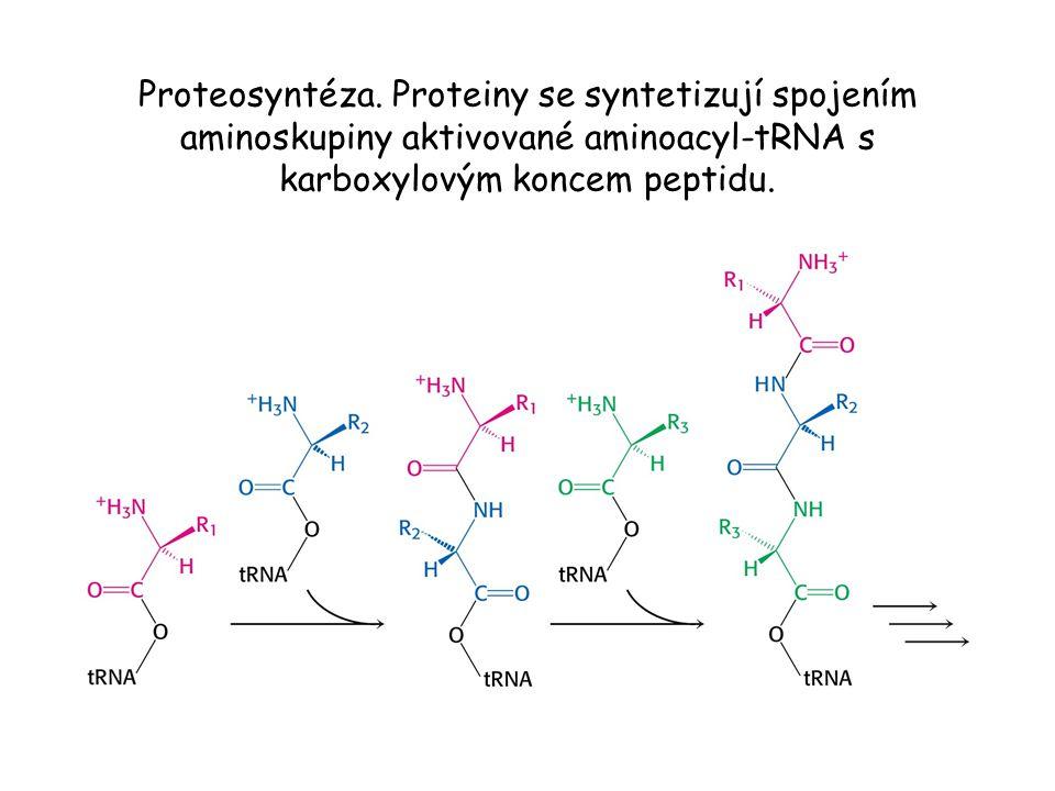 Proteosyntéza.