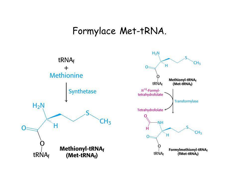 Formylace Met-tRNA.