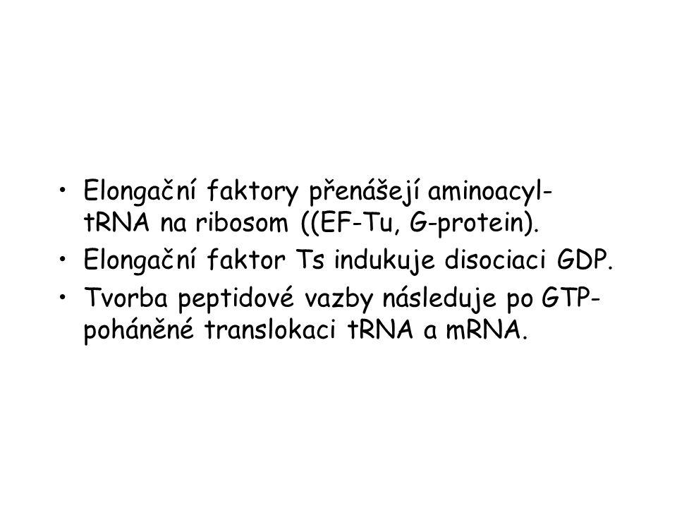 Elongační faktory přenášejí aminoacyl-tRNA na ribosom ((EF-Tu, G-protein).