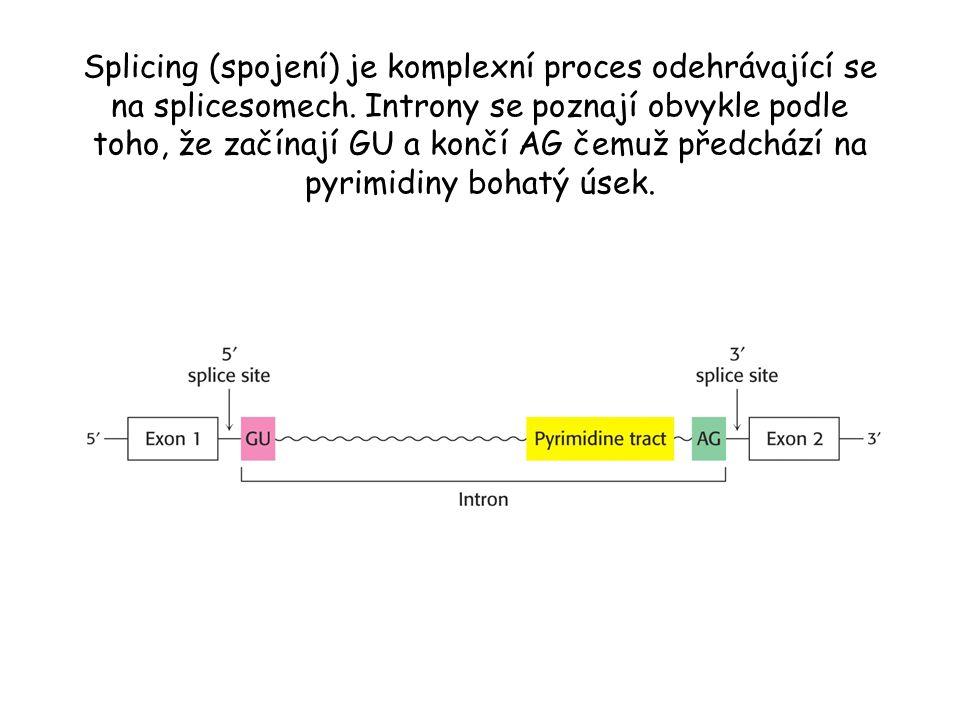 Splicing (spojení) je komplexní proces odehrávající se na splicesomech