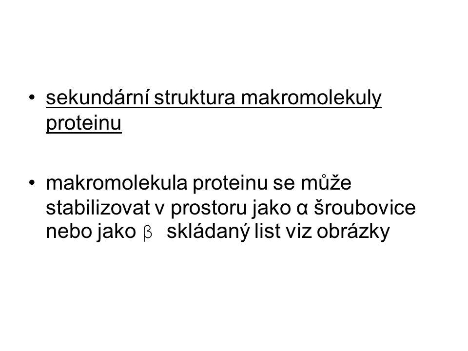 sekundární struktura makromolekuly proteinu